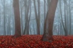 Парк осени в густом тумане - ландшафте осени с деревьями осени и упаденными апельсином листьями Стоковое Изображение