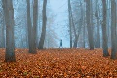 Парк осени в густом тумане с призрачным ландшафтом осени силуэта с деревьями осени и упаденными апельсином листьями Стоковая Фотография