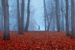 Парк осени в густом тумане с призрачным ландшафтом осени силуэта с деревьями осени и красные сушат упаденные листья Стоковое Изображение