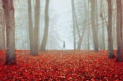 Парк осени в густом тумане с призрачным ландшафтом осени силуэта с деревьями осени и упаденными апельсином листьями Стоковые Фото