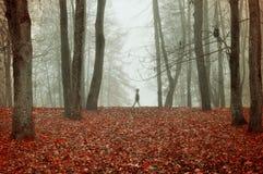 Парк осени в густом тумане с призрачным ландшафтом осени силуэта с деревьями осени и красные сушат упаденные листья Стоковое фото RF
