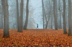 Парк осени в густом тумане с призрачным ландшафтом осени силуэта с деревьями осени и красные сушат упаденные листья Стоковое Фото