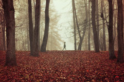 Парк осени в густом тумане с призрачным ландшафтом осени силуэта с деревьями осени и красные сушат упаденные листья Стоковые Фотографии RF