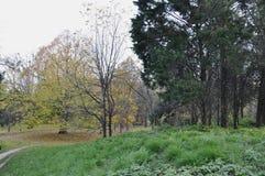 Парк осени в Киеве Стоковые Фотографии RF