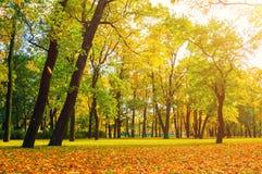 Парк осени в пасмурной погоде - красочном ландшафте осени Стоковые Изображения