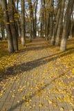 Парк осени в полдень стоковое фото