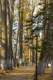 Парк осени в полдень стоковые фото