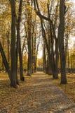 Парк осени в полдень стоковые изображения