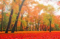 Парк осени в туманной погоде - красочном ландшафте природы осени Стоковое Изображение