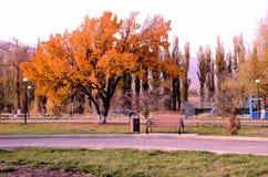 Парк осени в Tekeli Стоковые Изображения