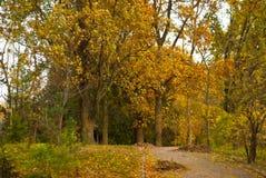 Парк осени, деревья и много листья Стоковое Фото