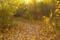 Парк осени, деревья и много листья Стоковое фото RF
