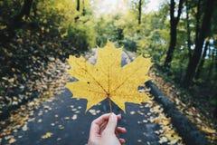 Парк осени желтый Стоковое Изображение RF