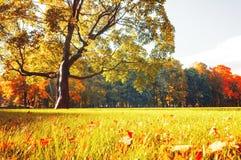 Парк осени живописный - солнечные деревья осени осветили солнечным светом Природа осени в солнечности в винтажных тонах Стоковые Фотографии RF