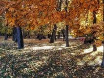 парк осени золотистый стоковые изображения rf