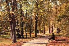 парк осени золотистый Стоковые Фото