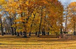 парк осени красивейший Осень в Риге Стоковые Фото