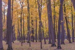 парк осени красивейший стоковые изображения rf