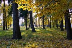 Парк осени Лучи солнца выходят сквозь отверстие листва осени moscow стоковая фотография