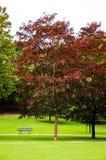 парк осени предыдущий Стоковые Фотографии RF