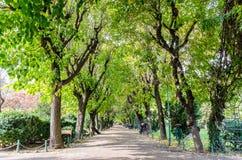 Парк осени публично Стоковые Фотографии RF