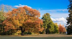 парк осени рисуночный Стоковое фото RF