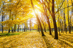 парк осени солнечный Стоковое Изображение