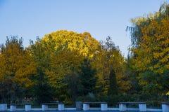 Парк осени со стендами стоковые фотографии rf