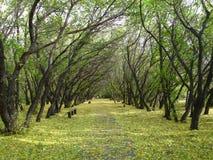 парк осени старый Стоковая Фотография RF
