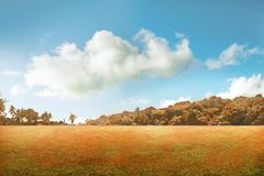 Парк осени с голубым небом Стоковые Изображения