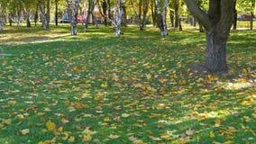 Парк осени с желтыми листьями, травой и деревьями акции видеоматериалы