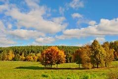 парк осени яркий Стоковое Фото