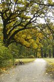 парк осени Стоковые Фото