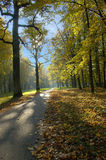 парк осени Стоковое Изображение RF
