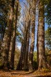 Парк осени Стоковые Фотографии RF