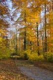 парк осени Стоковые Изображения RF