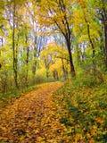 Парк осени, Kamenets Podolskiy, Украина Стоковые Изображения