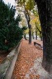 Парк осенью стоковое изображение rf