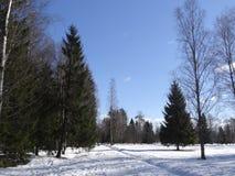 Парк Павловска Павловск Взгляд собора Андрюа апостола Россия стоковые изображения rf