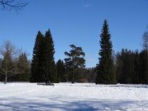 Парк Павловска Павловск Взгляд собора Андрюа апостола Россия стоковые изображения