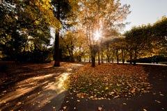 парк падения осени цветастый Стоковая Фотография