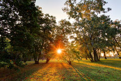 Парк падения с солнцем и деревом Стоковое Изображение RF