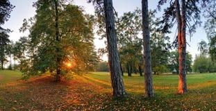 Парк падения с солнцем и деревом Стоковая Фотография