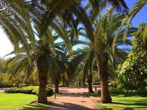Парк пальмы стоковые изображения