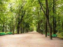 парк переулка зеленый Стоковое Фото