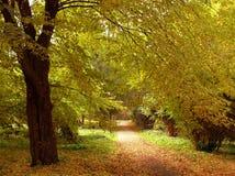парк переулка Стоковая Фотография