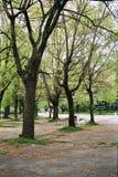 парк переулка Стоковые Фотографии RF