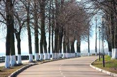 Парк переулка весной в утре. Стоковое Изображение