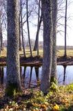 парк поместья осени старый Стоковые Фотографии RF