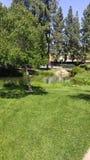Парк по соседству Стоковые Фото
